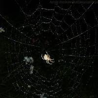 Pająka na pajęczynie [zdjęcie Artur Bińkowski]