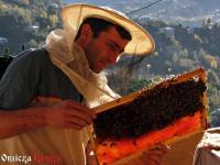 Przygody gruzińskie - Bliskie spotkanie pszczelego stopnia