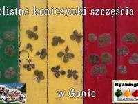 Czterolistne koniczynki na szczęście - konkurs z marzeniami w Gonio