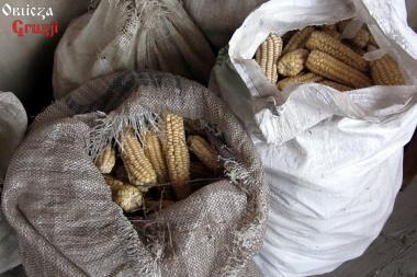 Worki z kolbami białej kukurydzy