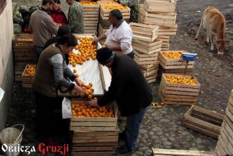 Sortowanie mandarynek w Chakvi