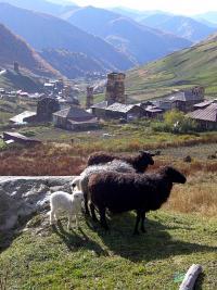Ushguli - widok z góry, Górna Swanetia, Gruzja