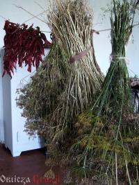 Suszone przyprawy i zioła
