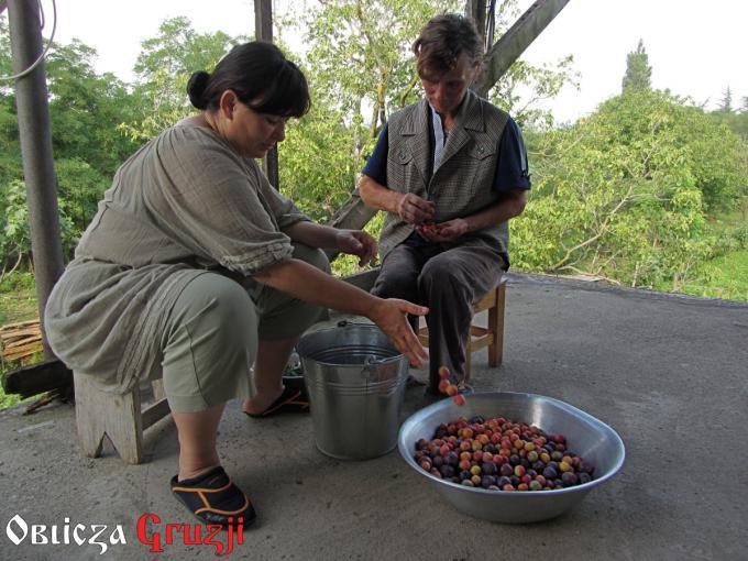 Przebieranie śliwek tkemali u Taliko w Warciche, Imeretia, Gruzja