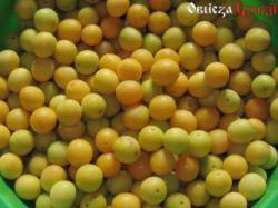 Owoce ałyczy na gruziński sos tkemali - odmiana żółta